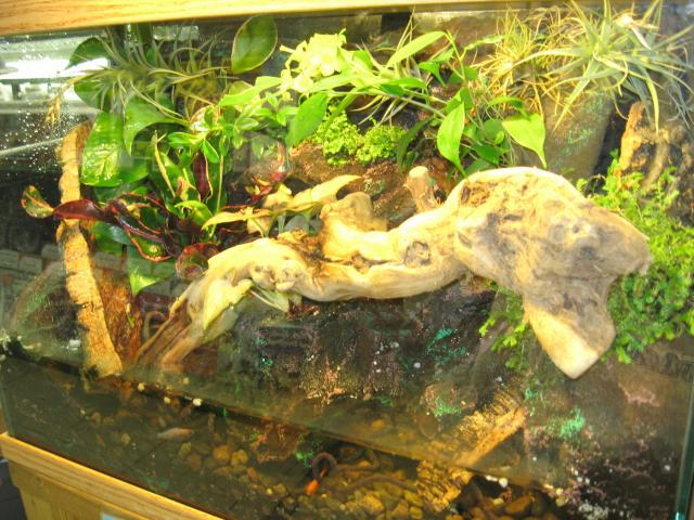 Semi-aquatic Vivarium