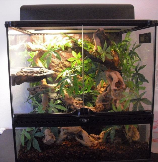 crested gecko terrarium decor