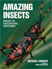 Amazing Insects: Images of Fascinating Creatures
