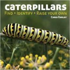 Caterpillars: Find - Identify - Raise Your Own