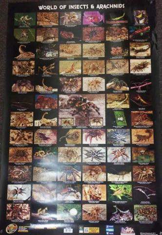 World of Insects and Arachnids Poster