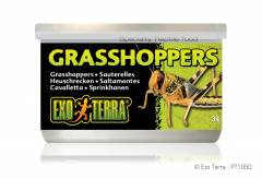 Exo Terra Canned Grasshoppers 1.2oz