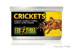Exo Terra Canned Small Crickets 1.2oz