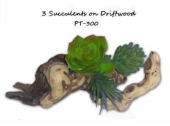 "Pet Tech 3"" Succulent on Driftwood"