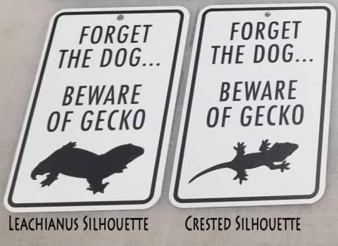 Forget the Dog Beware of the Gecko Sign (Crested)