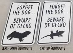 Forget the Dog Beware of the Gecko Sign (Leachianus)
