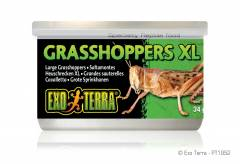 Exo Terra Canned Grasshoppers Exra Large