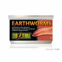Exo Terra Canned Earthworms 1.2oz