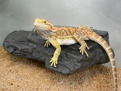 Pet Tech Medium Rock Ledge