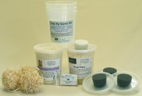 LLLReptile Fruit Fly Kit