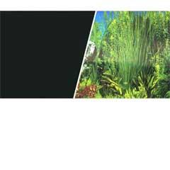 Plant Aquarium Scene / Solid Black Background 18""