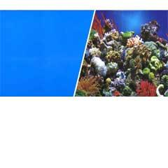 Aquarium Reef Scene / Solid Blue Background 18""