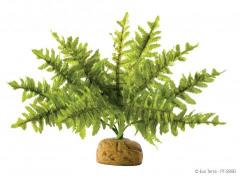 Exo Terra Boston Fern Plant Medium
