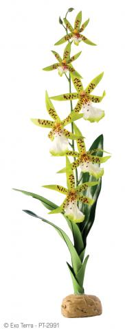 Exo terra spider orchid plant for Easy to maintain plants