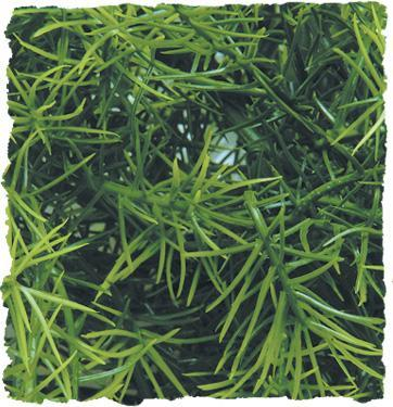 Zoo Med Cashuarina Bush Plant Medium