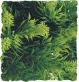 Zoo Med Malaysian Fern Bush Plant Large