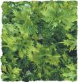 Zoo Med Australian Maple Bush Plant Large