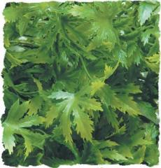 Zoo Med Cannabis Bush Plant Large