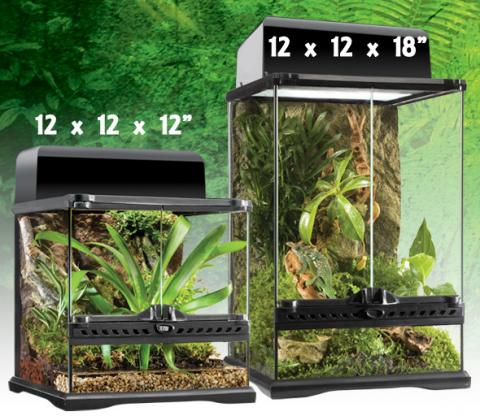 exo terra 12 x 12 x 18 glass terrarium. Black Bedroom Furniture Sets. Home Design Ideas