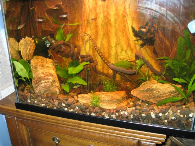 Aquatic Snake Set Up