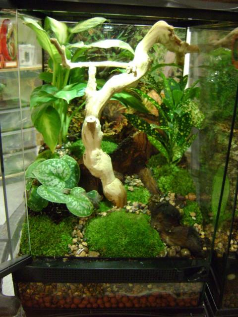 Planted Vivarium for B...