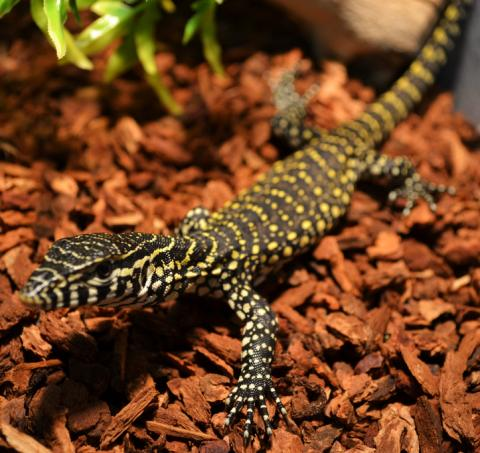 Image result for baby nile monitor