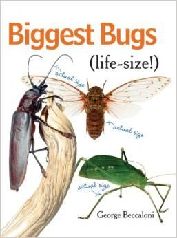 Biggest Bugs - Life Size