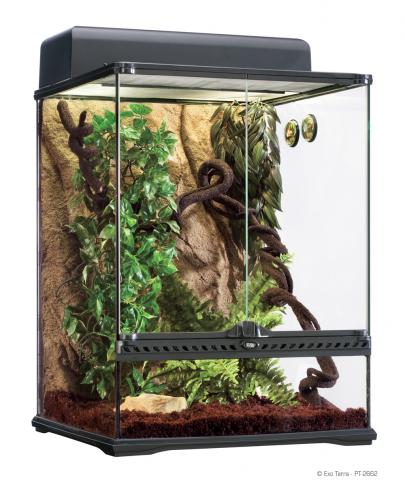 Exo Terra Medium Rainforest Habitat Kit For Sale
