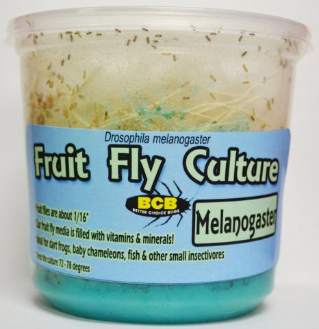 Fruit Fly Cultures (either Drosophila melanogaster or hydei)