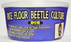 Rice Flour Beetle Culture shipped w/ live reptile