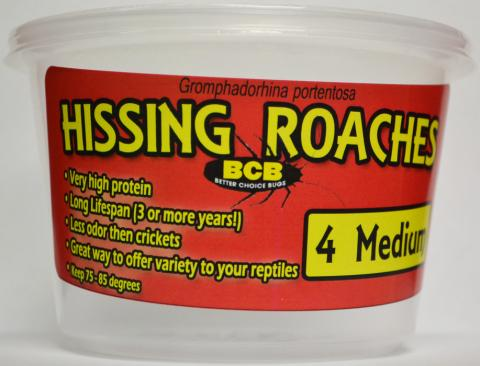 Cupped Hissing Roaches added to your live reptile order