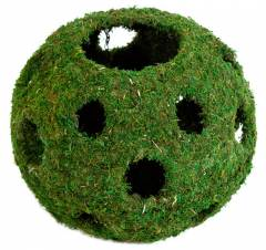 Galapagos  Mossy Cave Green With Holes 12""