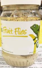 Melanogaster Fruit Fly Cultures shipped WITH Crickets