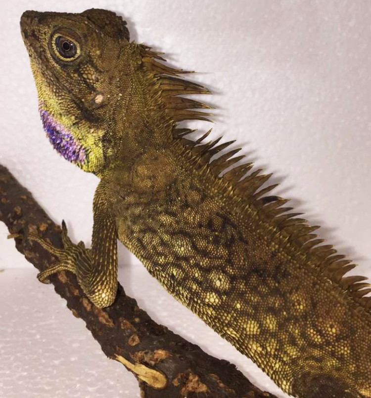 Other Lizards Archive
