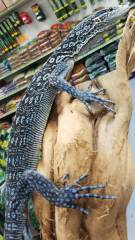 Blue Tree Monitors