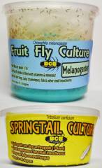 Fruit Fly and Springtail Combo Pack (2 of each)