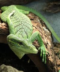 Green Tree Monitors