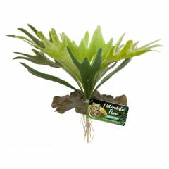 Zoo Med Staghorn Fern