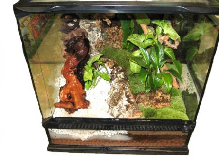 Complete Living Vivarium Starter Kit