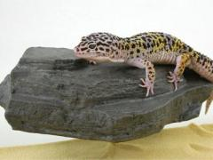 Pet Tech Small Rock Ledge