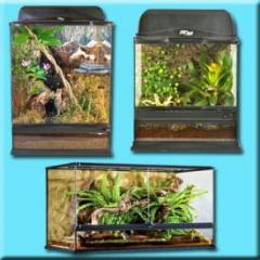 Natural Glass Terrariums