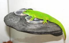 Pet Tech Magnatural Gecko Ledge Granite