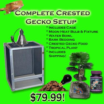 Crested Gecko Complete Cage Setup For Sale