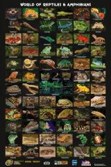 The World of Reptiles & Amphibians Poster