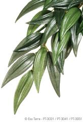 Exo Terra Ruscus Hanging Plant Large