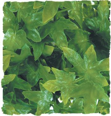 Zoo Med Congo Ivy Bush Plant Medium